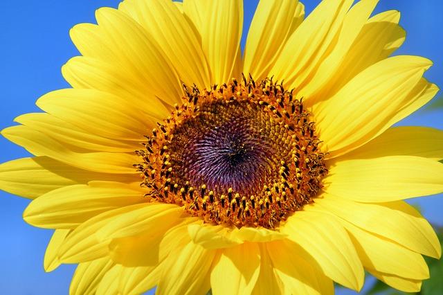 Let Him Go sun-flower